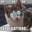 OKY DI GATTO